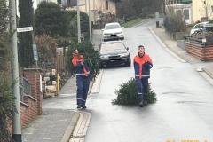 Weihnachtsbaumsammlung 2019